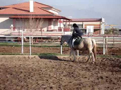 ΕΚΠΑΙΔΕΥΣΗ ΑΛΟΓΩΝ ΚΑΙ ΑΝΘΡΩΠΩΝ – HORSE AND HUMAN TRAINING
