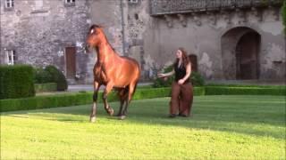 Gilliane Senn  Spectacle equestre