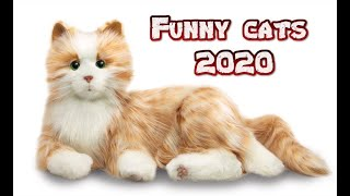 Funny cats Videos 2020 Cute Cats Videos  Funny Animals Video #AnimalsVideo #Catsvideos