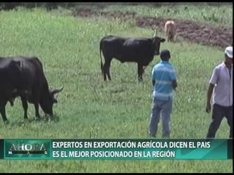 Expertos en exportación agrícola dicen el país es el mejor posicionado en la región