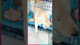 Most funny dogs