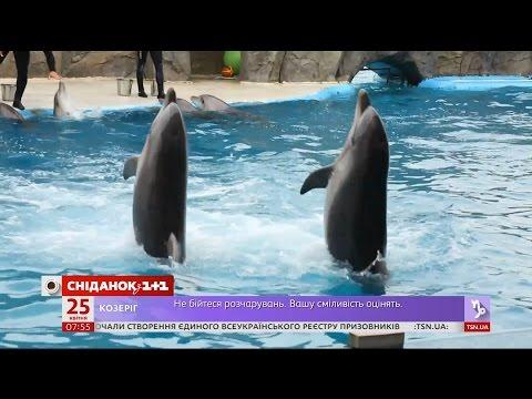 термобелье сколько стоит вход в дельфинарий в батуми зимней
