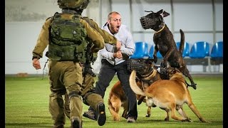 4 Israeli Special Forces Dogs simultaneous attack the Bad guy