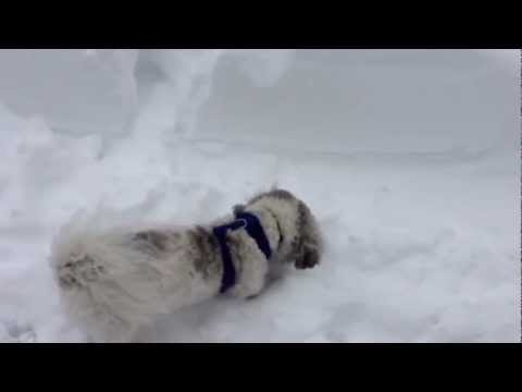 Henry's Fun in the Snow