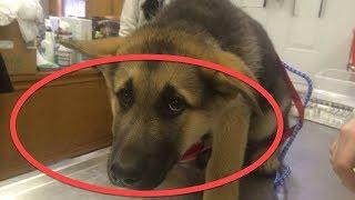Todas as noites enquanto o dono dorme o que seu cão faz é intrigante!!