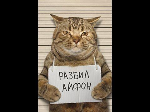 Смешные КОТЫ Лучшие приколы / Funny cats compilation Подборка #9 - Thug Life