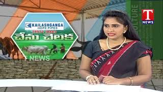 నాటుకోళ్ల పెంపకంపై హేమాంబర్ రెడ్డి విశ్లేషణ | చేను చెలక  Telugu
