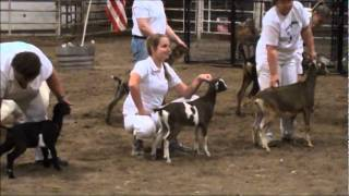 Baby Blue Wins Grand Champion & Best Doe In Show