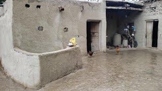 Happy Lifestyle In Punjab Village   Rural Life Of Pakistan