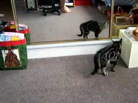 Cat Stalking Cat
