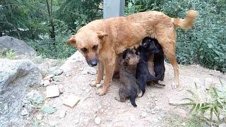 Litter Of Newborn Puppies Reunited With Mum