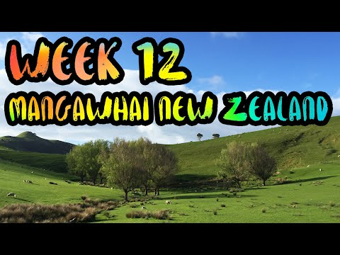 WEEK 12 : Mangawhai, New Zealand /// Living in a Farmhouse in the Green Hills of the North Island!!