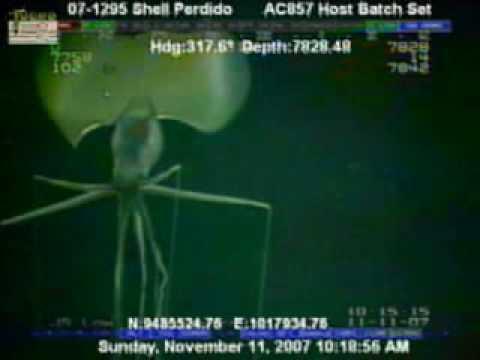 Alien-like squid filmed at oil drilling site
