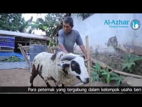 dari Domba jadi Sarjana - Al Azhar Peduli Ummat