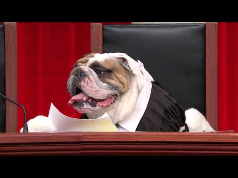 Last Week Tonight with John Oliver: Real Animals, Fake Paws Footage