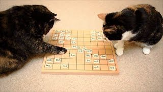 おかしい猫 - かわいい猫 - おもしろ猫動画 HD #38