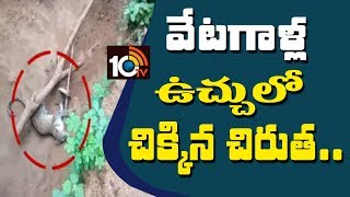 Cheetah Leg Accidentally catch steel Cage | Villagers Panic about Cheetah | Kamareddy