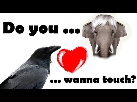 Animal Sex Funny Crazy Elephant Making Love to a Crow 2014