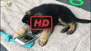 Funniest & Cutest German Shepherd Puppies #3 - Funny Dogs Compilation 2018