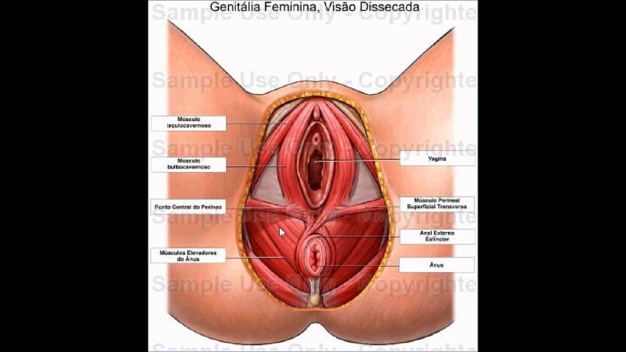 Урок с показом женских гениталий 2 фотография