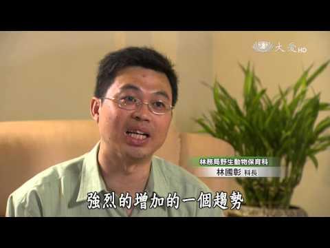 大愛-發現-20160109 末路食蛇龜