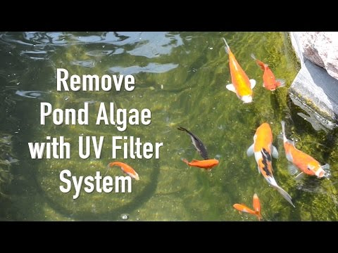 uv light for treating green water algae in ponds how to. Black Bedroom Furniture Sets. Home Design Ideas