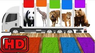 Kid -Kids -ZOO Transporter Truck | ZOO Animal Race Water Slides | Nursery Rhymes | Songs For Childr