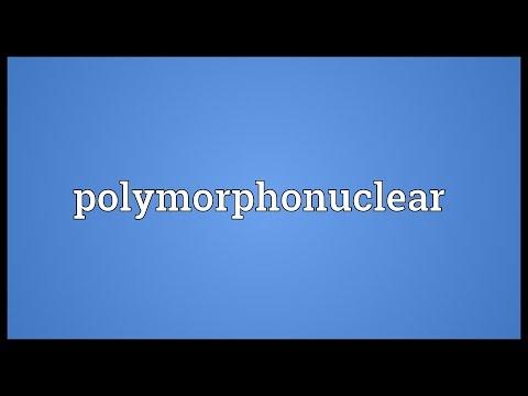 Header of polymorphonuclear