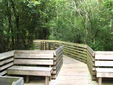 Lettuce Lake Boardwalk