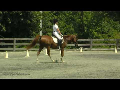 Sharon Sexton on Ebriz Rakkas, T-4, Heavenly Waters Dressage, 6/19/2010 Video