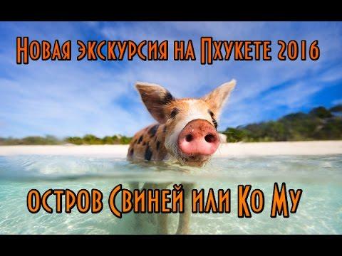 ПХУКЕТ ОСТРОВ СВИНЕЙ, НОВАЯ ЭКСКУРСИЯ В ТАИЛАНДЕ НА ОСТРОВ ГДЕ ЖИВУТ ОДНИ СВИНКИ MINI PIGI 2016