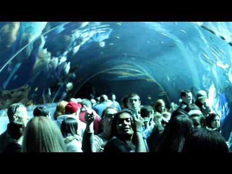 Georgia Aquarium - 2/3/2013