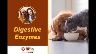 The Supplement Most Needed by Your Pet