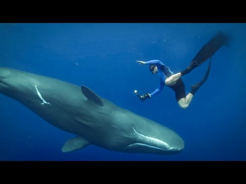 Feeling The Force of Sperm Whales Ultrasound - Super Giant Animals - BBC