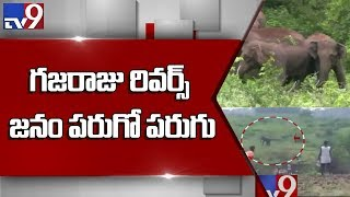 Elephants trample crops, scare locals in Chittoor