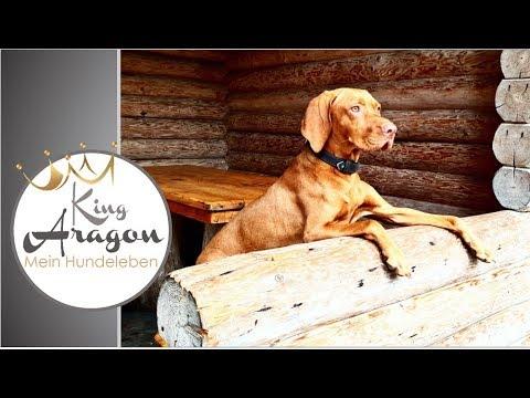 #30 – Hundeerziehung | Unsere Erfahrungen mit Vizsla Rüde Aragon
