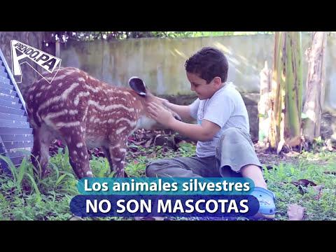 Aprendo con 'Valencia', la bebé Tapir