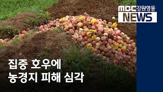 [R)집중호우에 농가 피해 심각