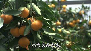 杵築映像12分 Promotion Video of Kitsuki Oita pref. Japan