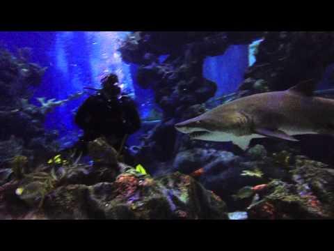 iDive Florida at Disney's Epcot Dive