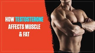 How Testosterone Levels Affect Muscle Growth and Fat Loss (2018)