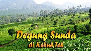 Download Lagu Suling Degung Sunda Merdu di Kebun Teh Gratis STAFABAND