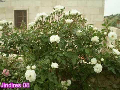 احمد ناصر عفرين  10-ciroka dewri§e Evdi Ahmad naser