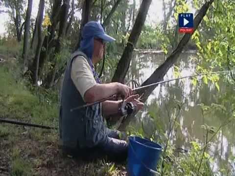 Wędkarstwo Amur Karp Leszcz Karaś