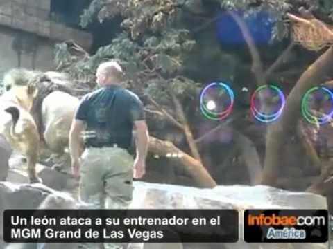 LEON ATACA A SU CUIDADOR IMPRESIONANTE. LAS VEGAS, USA. bededede.com.ar