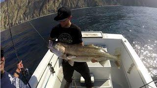 White Seabass Fishing, Catalina Island