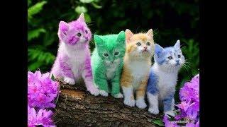 Rửa Mặt Như Mèo - Meo Meo rửa mặt như Mèo | Nhạc Thiếu Nhi Vui Nhộn Sôi Động Hay Nhất Cho Bé