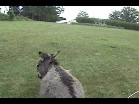 A dog and a donkey - YouTube