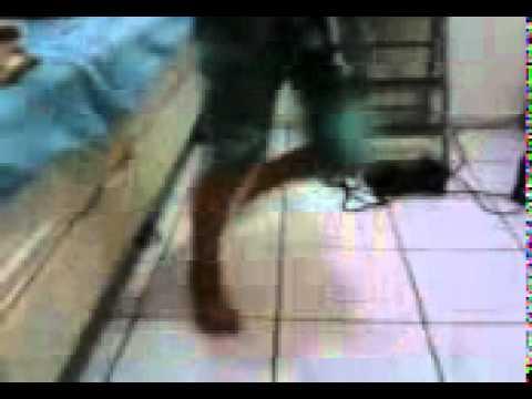 Free Estep video