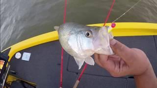 GARMIN LIVESCOPE VS HUMMINBIRD 360 Crappie Fishing.